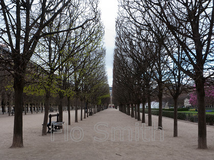 fsroyaltrees0439 